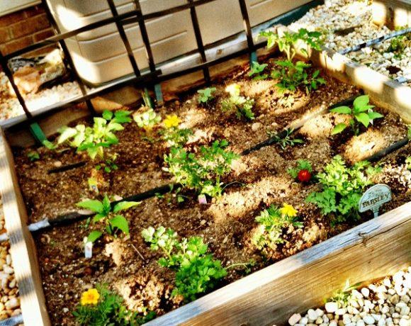 Summer Garden Planting – You Best Get On It!