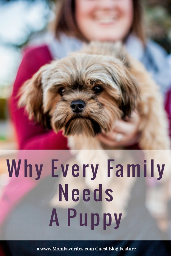 Why Every Family Needs a Puppy, www.MomFavorites.com