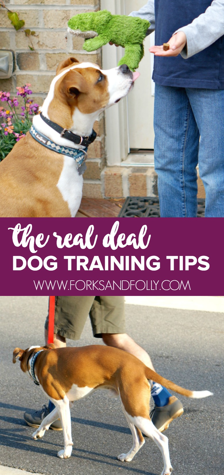 These pro dog training tips were learned the hard way.  After breaking my arm Hank went to boarding 'school'.  Below you'll find the best tips we learned.