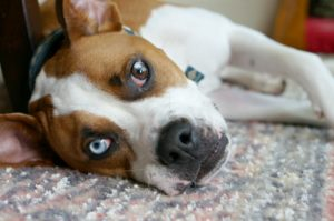 Just because he's the most laid back, doesn't mean he shouldn't get the best! Here are some great ways to fuel the wag and prioritize the health of your family pet!