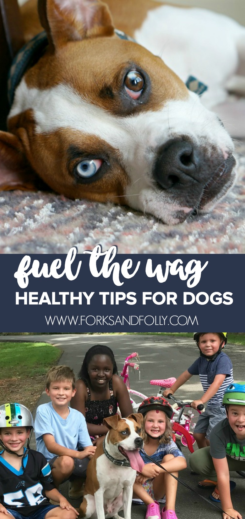 Just because he's the most laid back, doesn't mean he shouldn't get the best!  Here are some great ways to fuel the wag and prioritize the healthy tips for your dog!